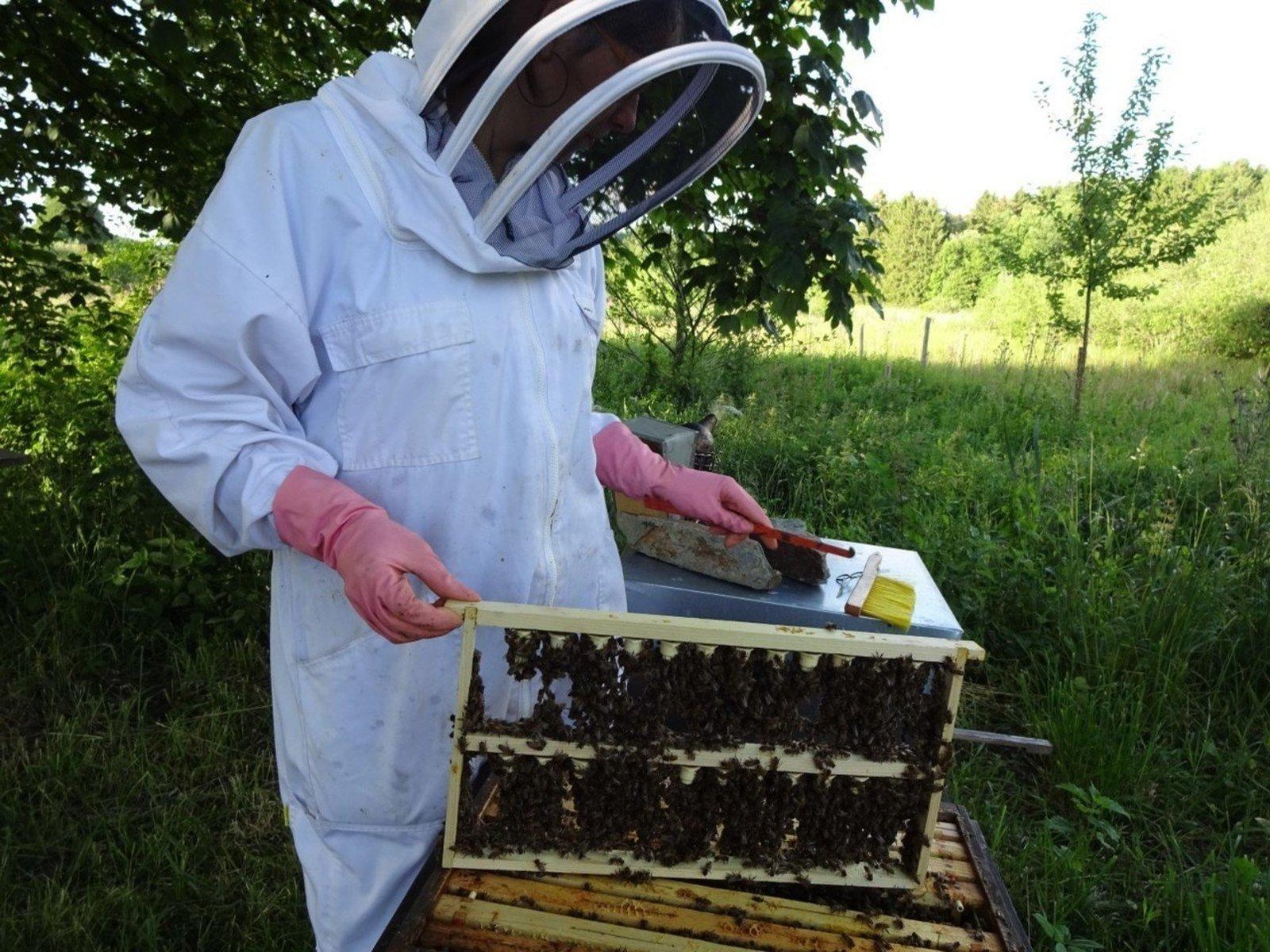 Les Butineuses srl - Apiculture - Vente de produits de la ruche et dérivés - Vente d'essaims, de reines - Vente de matériel apicole